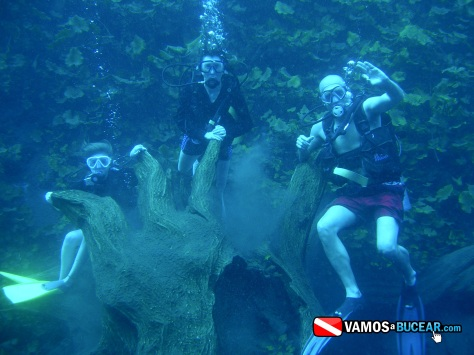 BUCEO 2013 072