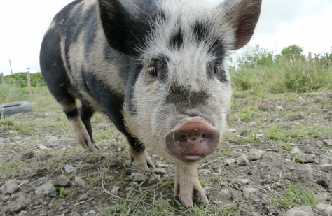 Foto: www.Piggy-Piggy.com