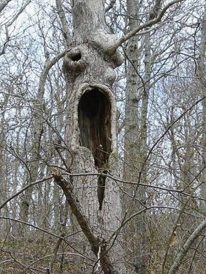 amazing_cool_weird_crazy_offbeat_monster_trees_08_2009072322314611537